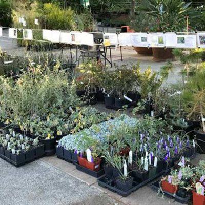 Fall Bulb & Native Plant Sale