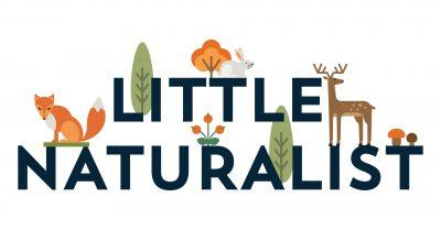Little Naturalist: Busy Beavers