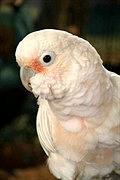 Wasatch Avian Education Society