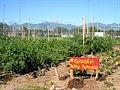 New Roots Redwood Road Farm