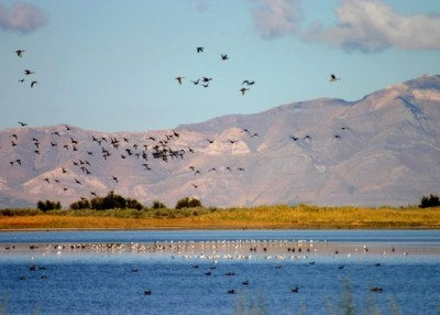 Inland Sea Shorebird Reserve (ISSR)